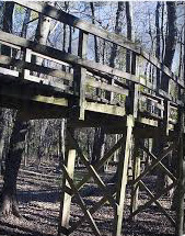 congaree elevated boardwalk 1