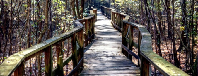 congaree wavy boardwalk
